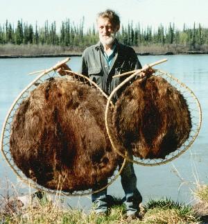 Trapline Beaver